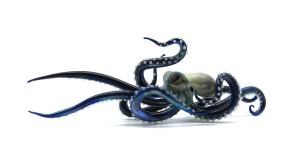 penumbra blue octopus
