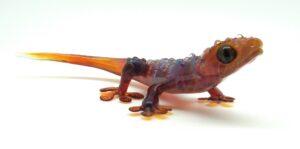 AP Gecko 1
