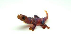 AP Gecko