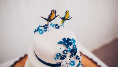 Blue and Yellow Macaw Cake Topper
