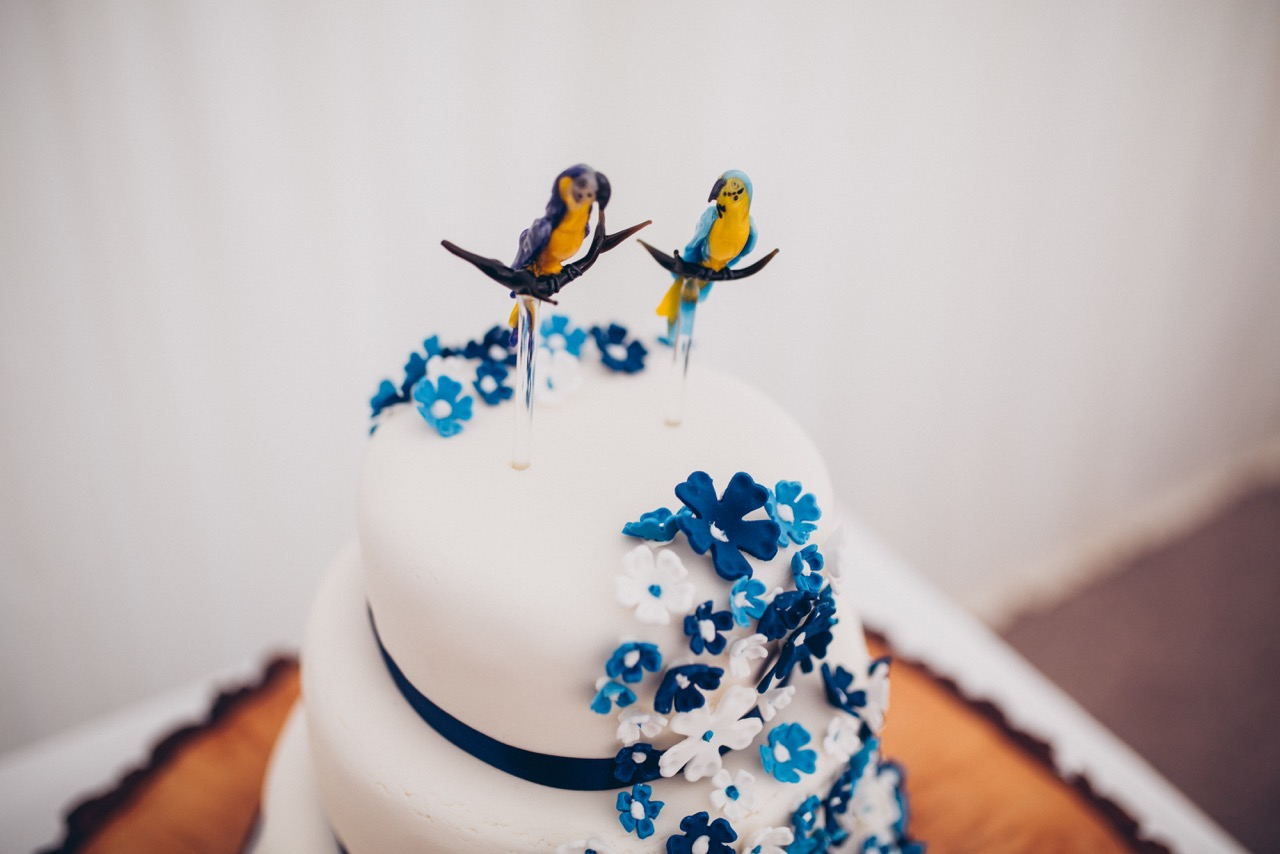 blue-yellow-macaw-topper